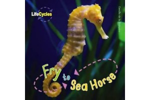 Life Cycles - Fry to Sea Horse